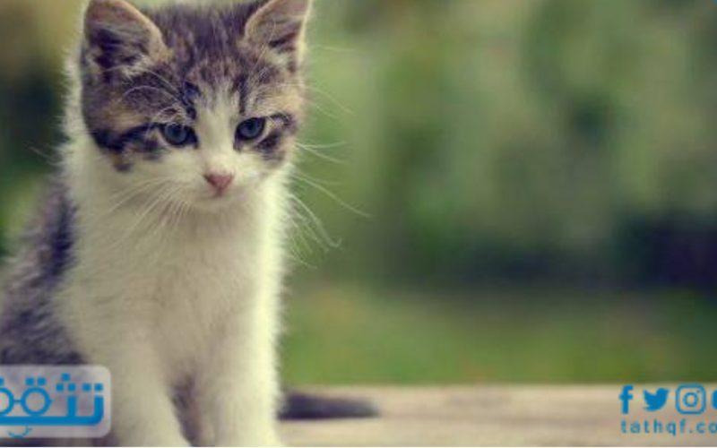 تفسير حلم ضرب القطط في المنام لابن سيرين للمتزوجة والعزباء