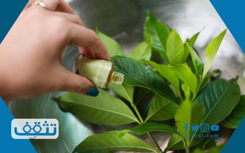 طريقة التخلص من الناموس بدون مبيدات حشرية باستخدام الأعشاب والزيوت الطبيعية