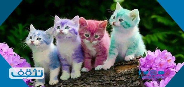 تفسير حلم القطط الصغيرة الملونه تعض وتهاجم