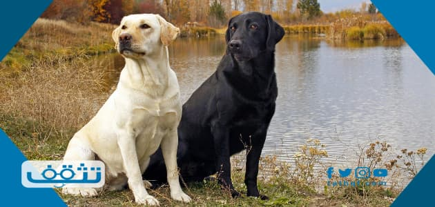 تفسير حلم رؤية الكلب الأسود والأبيض في المنام